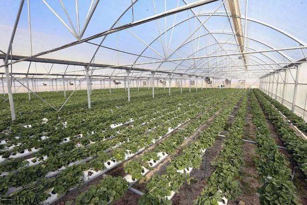 ۱۰۰ هکتار زمین دولتی شیروان مستعد ساخت مجتمع گلخانهای است