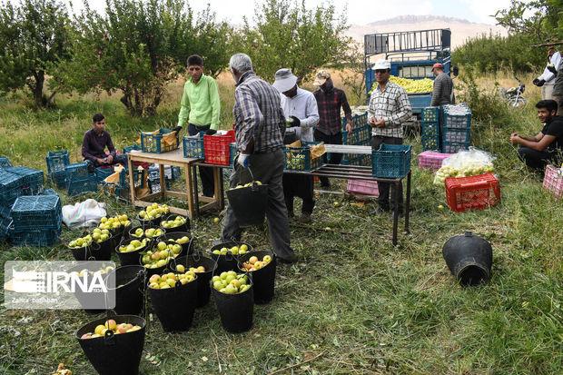 ۹۶۳ هزار تن انواع محصول کشاورزی در میاندوآب تولید شد