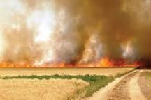 آتش زدن بقایای گیاهان مزارع غلات میکروارگانیسم خاک را از بین می برد