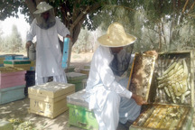 سالانه هشت تن عسل در خاش تولید می شود