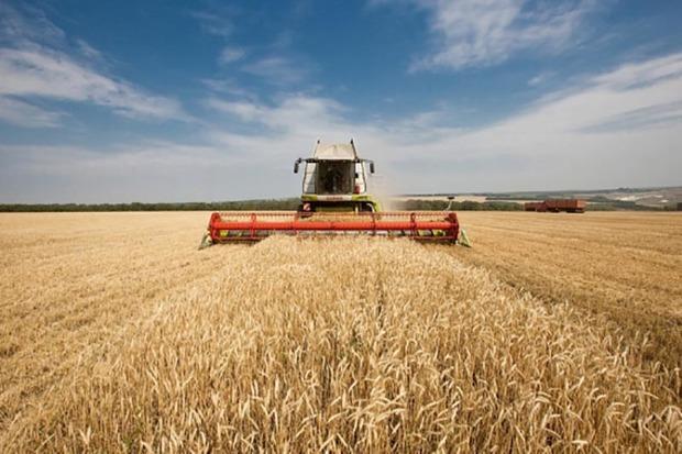 241 هزار تُن گندم در بیجار خریداری شد