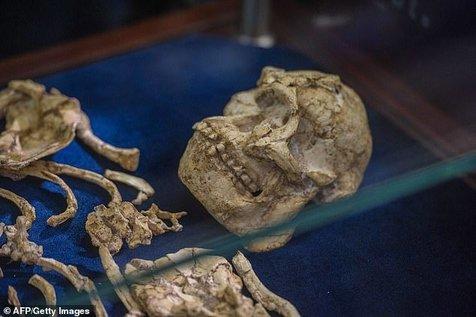 بقایای اسکلتی عجیب که در آفریقا کشف شد+ تصاویر