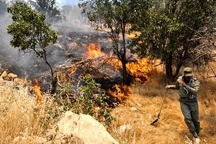 آتشسوزی مجدد جنگلهای کوه سفید لنده