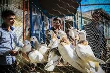 انتقال بازار پرنده فروشان قزوین در هاله ای از ابهام