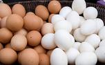 تخم مرغ و گوشت دوباره گران شد