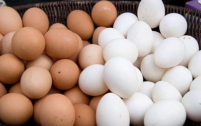 خوراکی هایی که بیشتر از تخم مرغ پروتئین دارند