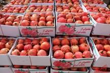 سالانه 19 هزار تن انار در شهرستان یزد تولید می شود