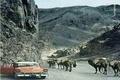عکس | جاده هراز شش دهه قبل!