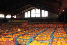 حدود 1200 تن میوه برای نوروز همدانی ها ذخیره شد