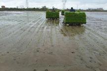 استاندار مازندران نسبت مصرف بی رویه آب کشاورزی هشدار داد