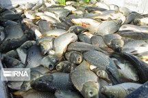 امکان تولید ۱۰۰هزار تن ماهی در لرستان
