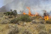 آتش سوزی در 12 هکتار از اراضی حفاظت شده آذربایجان غربی