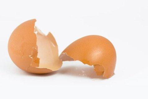 پیوند استخوان با پوست تخم مرغ