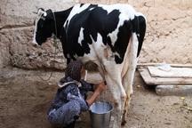 فروش شیر برای دامداران خراسان شمالی صرفه اقتصادی ندارد