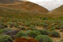 بهره برداری از سه طرح گیاهان دارویی در استان مرکزی