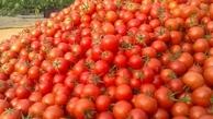 ۱۳ هزار تن گوجه فرنگی با نرخ تضمینی از کشاورزان خراسان رضوی خریداری شد