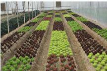 ۲۷ پروژه کشاورزی البرز به بار نشست