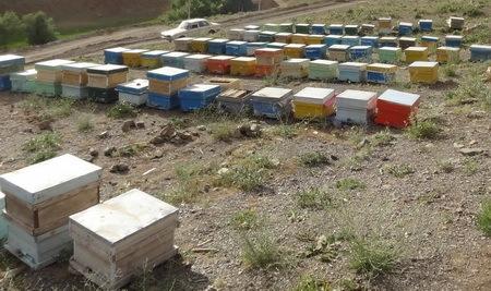 میزبانی مراتع ییلاقی چالدران از زنبورداران شمال آذربایجان غربی