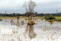سیلاب ۲۲ میلیارد تومان به کشاورزی گلوگاه خسارت زد