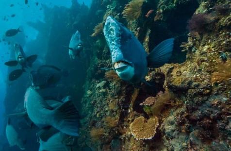 خطر اسیدی شدن اقیانوسها برای فیتوپلانکتونها