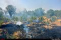 پرهیز کشاورزان آبیکی از آتش زدن مزارع