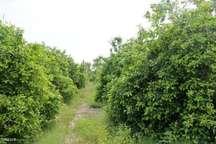 نابودی 11 هزار هکتار از باغهای شهریار در 20 سال این شهر، شهریار نیست