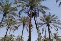 نخستین دستگاه بالابر مکانیزه خرماچین کشور در دشتستان بوشهر رونمایی شد