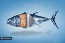 رهگیری ماهی تن با بلاک چین از فیجی تا بروکلین