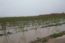 سیل به بخش کشاورزی خراسان جنوبی خسارت زد