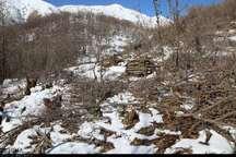 جریمه قطع درخت و تخریب منابع طبیعی باز دارنده نیست
