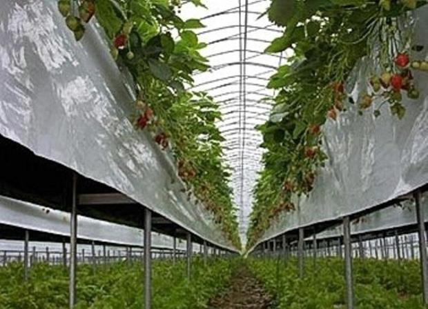 مجتمع گلخانه ای خمین با کمبود آب مواجه است