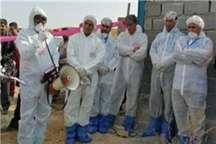 مانور فرضی مقابله با آنفلوآنزای فوق حاد پرندگان در نیکشهر برگزار شد