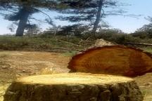 اعلام جرم شهرداری علیه قطع درختان پارک جنگلی تربت جام