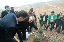 اجرای طرح های بیابان زدایی در 1500 هکتار اراضی البرز