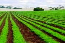 4 ساعت صرفهجویی؛ 20 ساعت برق رایگان برای کشاورزان کهگیلویه و بویراحمدی
