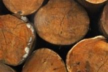 کشف 9 تن چوب جنگلی قاچاق در لردگان