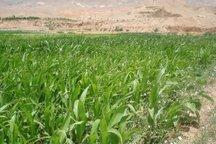 24000 هکتار کشت آب بر استان مرکزی کاهش یافت
