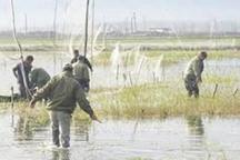کند شدن طرح برخورد با شکارچیان غیرمجاز در مازندران