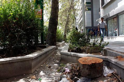 مرثیه ای برای درختان تهران