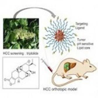 کشف داروی گیاهی برای درمان سرطان کبد