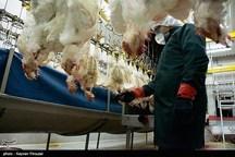 ۲۰ هزار مراقبت فعال برای رصد آنفلوانزای پرندگان همدان در همدان انجام شد