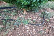 تند باد74میلیارد ریال به زیرساخت های گچساران خسارت زد