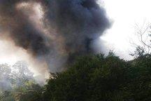 پنج هکتار از اراضی پیرجه نکا دچار آتش سوزی شد