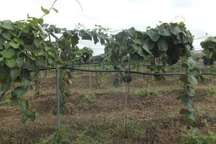 سیستم آبیاری تحت فشار در 20 هکتار از اراضی باغی تالش اجرا شد