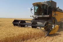 90 هزار تن گندم خراسان شمالی خریداری شد