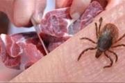 کاهش 5 درصدی مبتلایان به تب کنگو در سیستان و بلوچستان