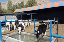 6 طرح کشاورزی در رابُر آماده بهره برداری شد