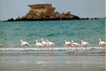 ستاد احیای دریاچه ارومیه در انتظار اجازه وزارت نیرو