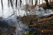 آتش سوزی جنگل های عباس آباد خاموش شد