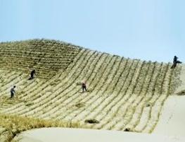 بزرگ ترین دیوار جهان در چین، آن هم از جنس درخت!